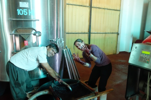 Taking the pulp out of the first batch of wine