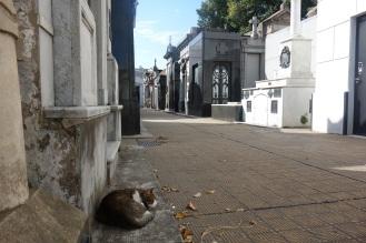 Sleeping cat in the cemetery of la recoleta